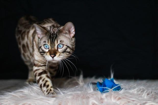 Nuage creation photographe animalier var