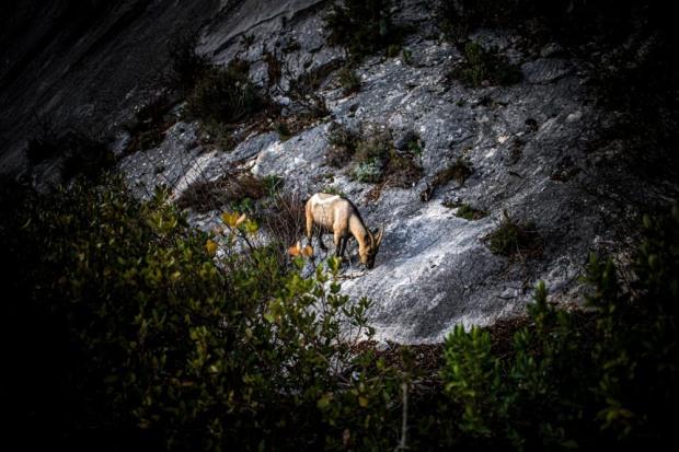 Nuage Création photographe animaux aix en provence