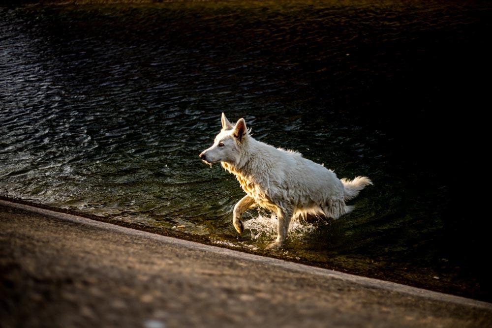 photographe animaux trets
